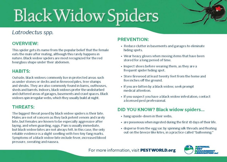 Black Widow Spider Extermination - Hannibal, MO