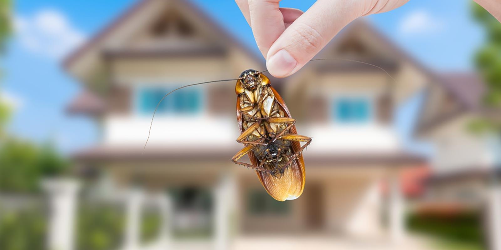 Roach Extermination - Hannibal, MO