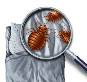 Eliminate Bed Bugs - Hannibal, MO